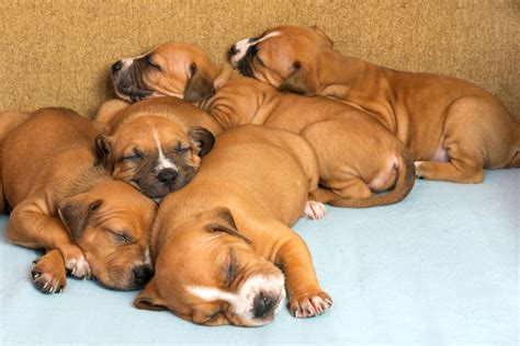 when do newborn puppies open their during which stage of growth do puppies open their