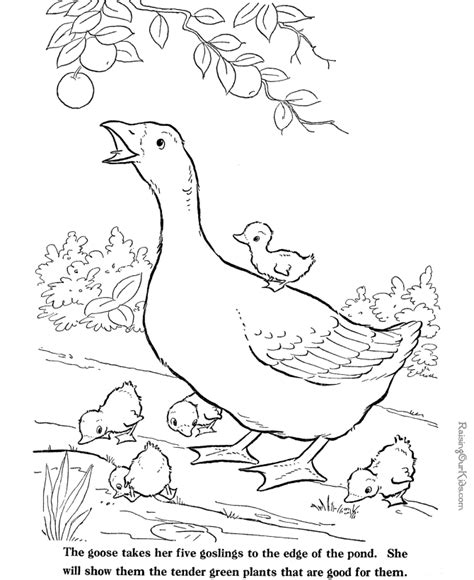Free Farm Animal Coloring Sheets 027 Farm Animals Colouring Pages