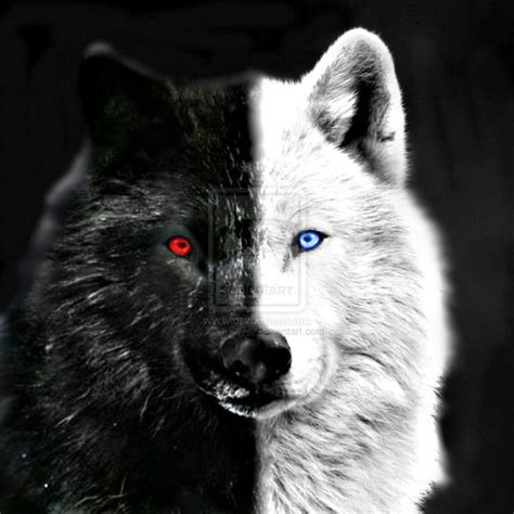 imagenes lobo blanco 20 best images about lobos on pinterest amigos wolves