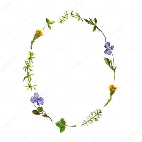 cornice floreale cornice floreale con l acquerello disegno erbe e foglie