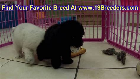 puppies for sale in fairbanks fairbanks alaska dogs for sale