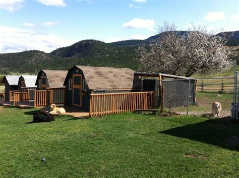 the dog house boarding kennels best 25 dog boarding kennels ideas on pinterest doggie rescue animal house rescue
