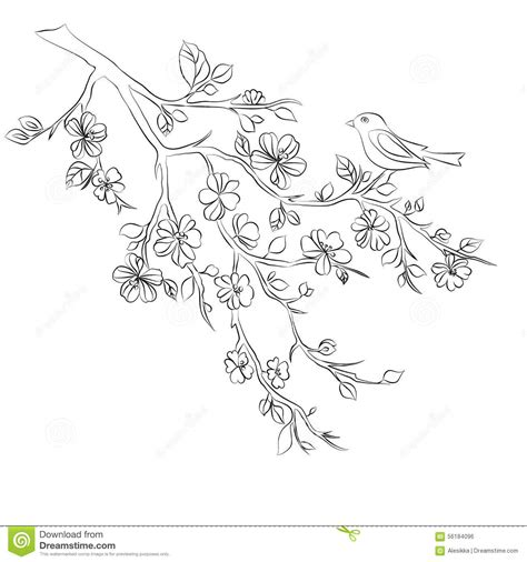 Cherry Blossom Branch Drawing Outline by Twig Cherry Blossoms And Bird Stock Vector Illustration Of Branch Plant 56184096