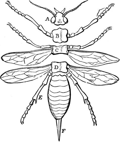 insect body sections insect body parts images