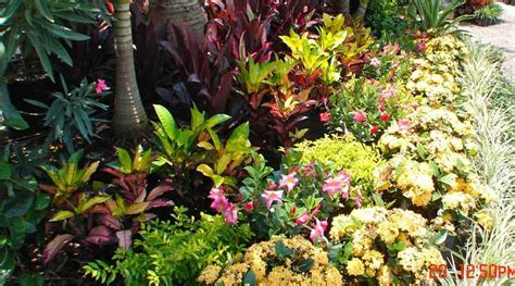 tropical gardening ideas tropical landscape design ideas gardening flowers 101