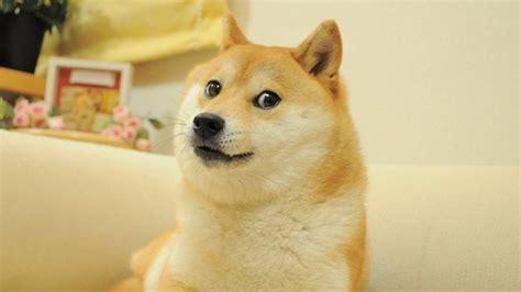 Doge Meme Wallpaper - doge wallpaper 1920x1080 wallpapersafari