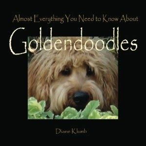 goldendoodle puppy books 17 best images about goldendoodle puppies on