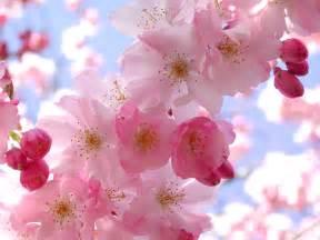 best flower worlds best 8 lovely flower wallpapers simply get it