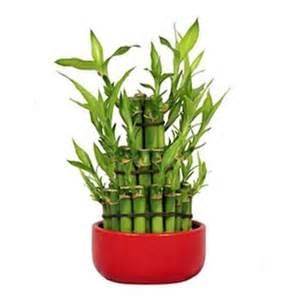 plantes vertes d 180 int 233 rieur