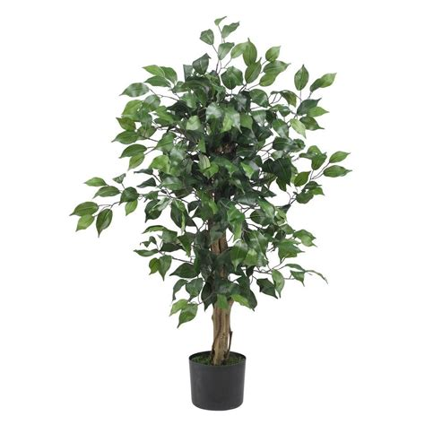 nearly 3 ft ficus silk tree 5298 the nearly 3 ft ficus silk tree 5298 the home depot