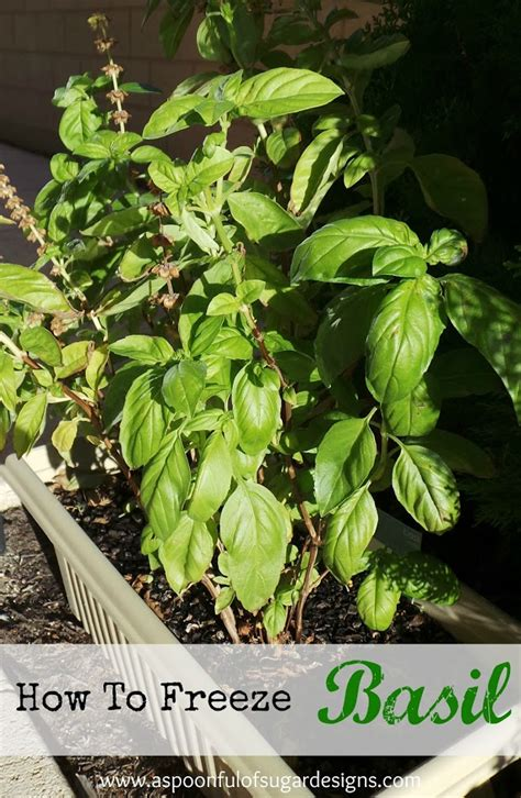 how to freeze basil a spoonful of sugar