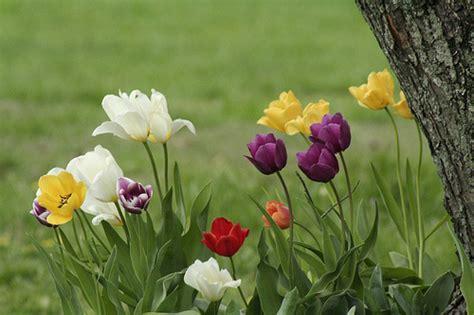 blooming flowers photo