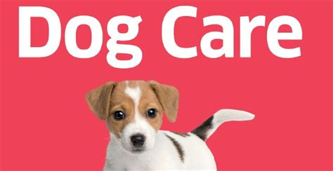 puppy care 101 101 essential tips care vetbooks