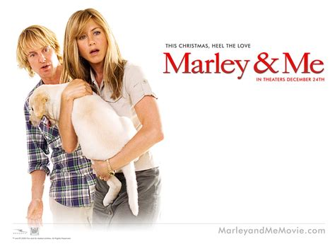 marley and me images marley me hd wallpaper and