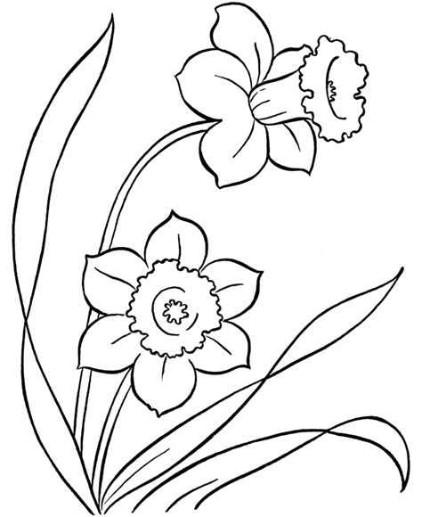 daffodil pictures  print coloring home