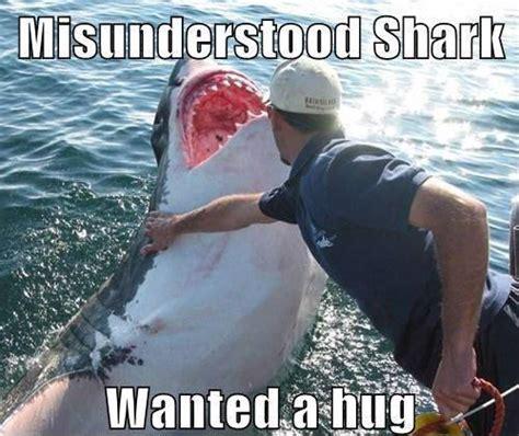 Meme Shark - shark meme