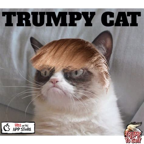 Make A Grumpy Cat Meme - trumpy cat lol pinterest cat