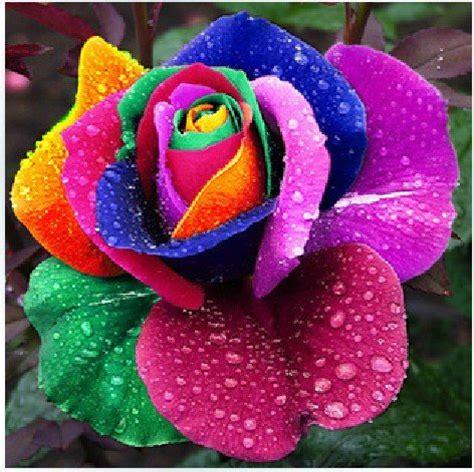 Bibit Bunga Lavender Asli harga tanaman bunga lavender tanamanbaru