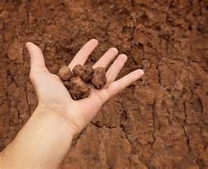 Clay soil harvest to table