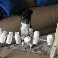 hundespiele seite  dogs hunde