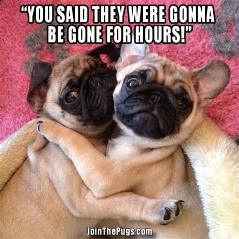 pug captions join the pugs gt caption us wednesday winner for april 3 2013