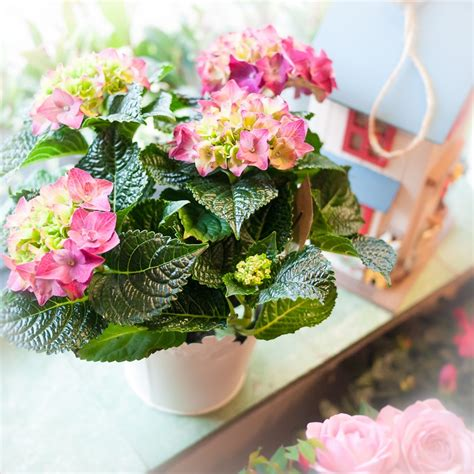cottage garden flowers and gifts 1110440 the cottage garden flower shop dunstable s