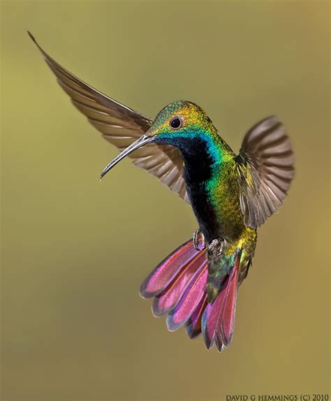 facts you didn t know about hummingbirds tony hakim