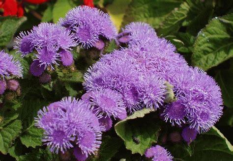 piante da giardino contro le zanzare addio zanzare senza prodotti chimici grazie a queste 5