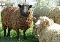 Domestic Animals Images Farm Collection HD Wallpaper And