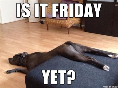 Is It Friday Yet Meme - 16 dogs with a case of the mondays rover blog