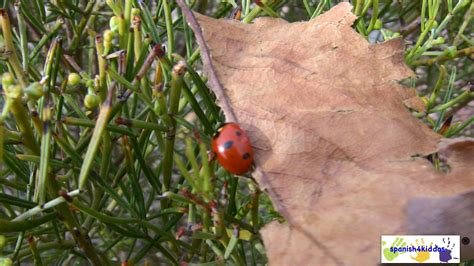 how to find ladybugs in your backyard how to find ladybugs in your backyard 28 images how to
