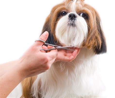 dogs grooming we are hiring in home mobile cat and groomer alpharetta johns creek duluth