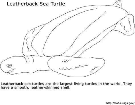 leatherback turtle coloring page leatherback sea turtle coloring pages