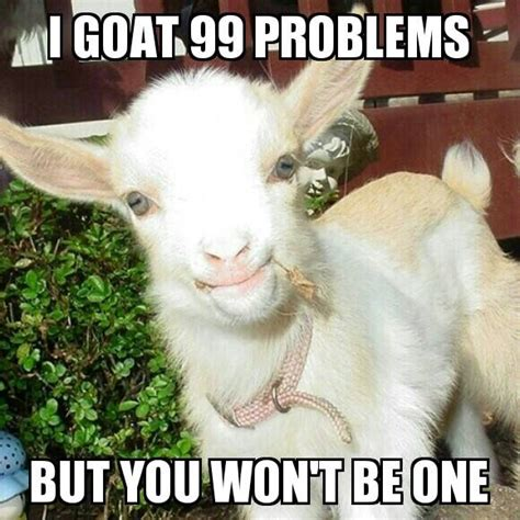 Funny Goat Memes - high goat memes www imgkid com the image kid has it