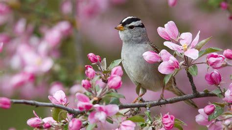 flowers branch sparrow bird wallpapers 1920x1080 530461