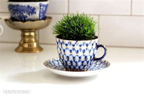 tiny indoor plants teacup gardens 5 minute miniature container garden the