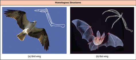 determining evolutionary relationships voer