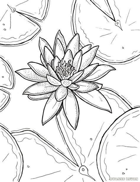 coloring pages monet s water lilies free printable water lily coloring page download ryanne