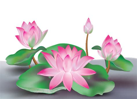 tutorial vector flower create a lotus flower with adobe illustrator cs5