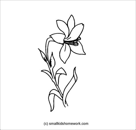 Outline Sketches Of Flowers by Outline Of Flowers Az Coloring Pages