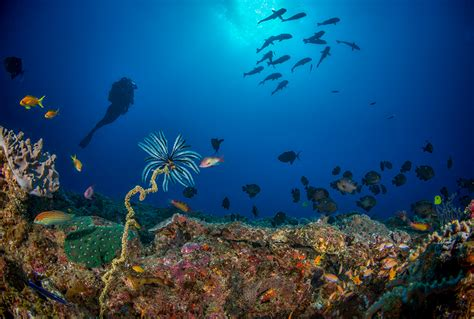 scuba diving in mozambique books experience of the month safaris iconic africa