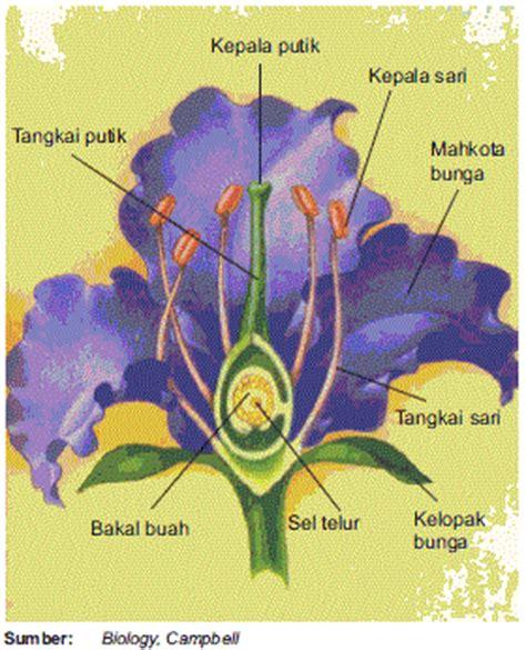 pendidikan  pengetahuan bagian fungsi struktur bunga