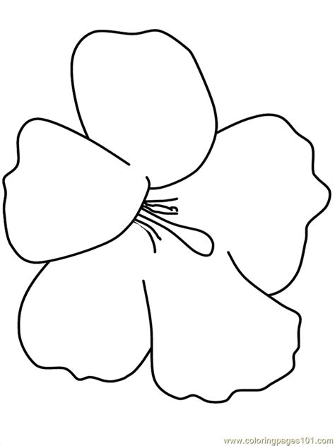 hawaiian flower coloring pages coloring home