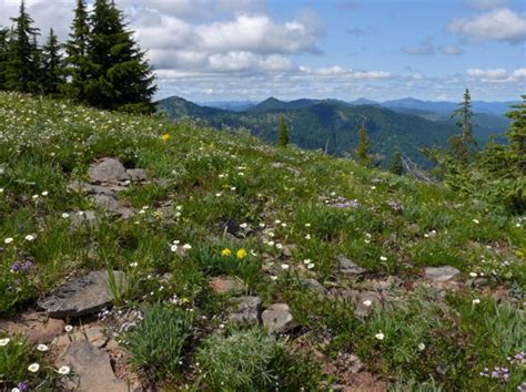 mountain plants of the western cascades home