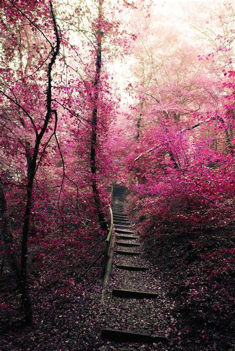 pink autumn surreal fall forest by gabriela buff