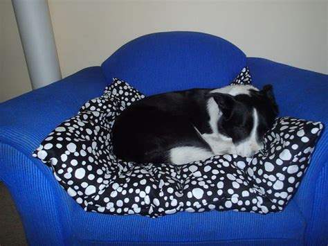 giant pillow bed 15 no sew diy pet beds for your best friend