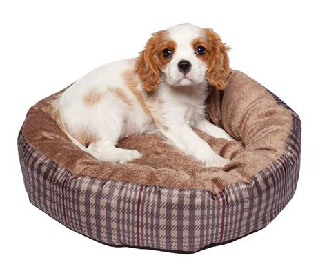 Sumber Grosir Oblong Blue Mat Flece Fit To L 20 modern pet beds design ideas for small dogs diy fancy bed i diy harmony grey patched