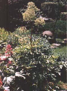 giardino botanico bergamo giardino botanico di bergamo