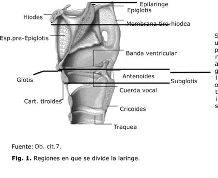 vestibulo laringeo glotis detecci 243 n precoz del c 225 ncer de laringe en cuba