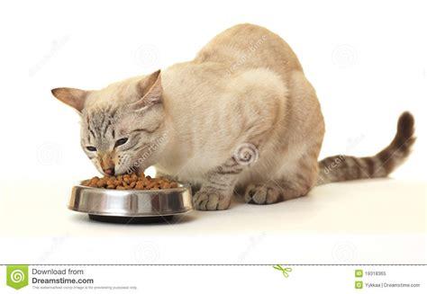 eat cat cat food clipart clipart suggest